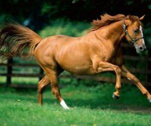 Atların Bakımı