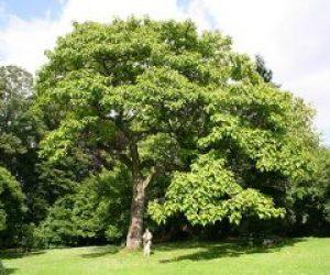 Ağaçsız Memleket Duvaksız Geline Benzer İle İlgili Kompozisyon