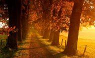 Sonbahar Hakkında Bilgi Kısaca