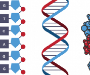 DNA'nın Yapısında Hangi Bazlar Bulunur?