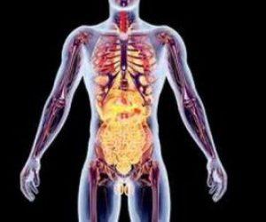 Endokrin Sistem Nedir Kısaca Hastalıkları Nelerdir?