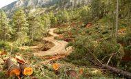 Dünyamızdaki Ağaçların Yok Edilmesi Hangi Sorunlara Yol Açar