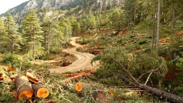 ağaçların yok edilmesi ile ilgili görsel sonucu