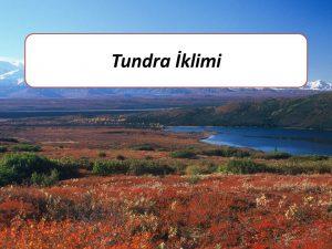 slayt48-9-sinif-tundra-iklimi