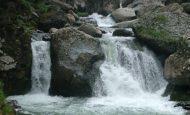 Dünyadaki Su Kaynaklarının Ne Kadarını Canlılar Kullanır