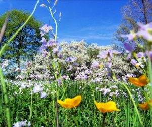 İlkbahar Mevsiminde Ne Gibi Değişiklikler Olur