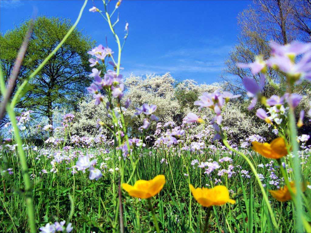 ilkbahar değişiklik ile ilgili görsel sonucu