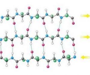 Proteinlerin Birbirinden Farklı Olmasının Sebebi Nedir?