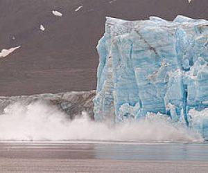İklim Değişiklikleri Bitki ve Hayvan Türlerini Nasıl Etkiler