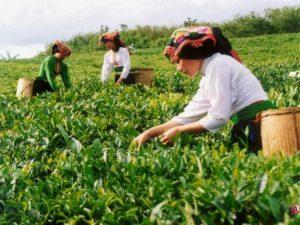 vietnam-da-cay-toplayan-kadinlar