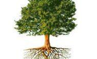 Ağaç İle İlgili Atasözleri Ve Anlamları