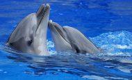 Doğadaki Canlıları Neden Korumalı ve Sevmeliyiz