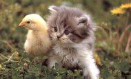 Hayvanları Neden Korumalıyız Ve Sevmeliyiz?