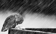 Kar Ve Yağmur Nasıl Oluşur?