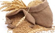 Buğday Nerede Yetişir Kısa Bilgi