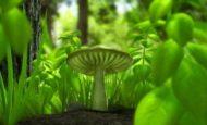Bakteri Ve Bitki Fotosentezi Farkları Ve Ortak Özellikleri