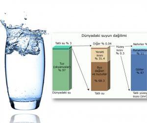 Yeryüzündeki Suyun Kaçta Kaçı Canlılar Tarafından Kullanılır