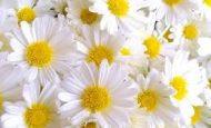Çiçeğin Kısımları Ve Görevleri Nelerdir?