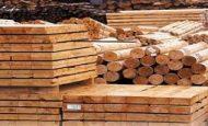 Ormanlarda Ağaç ve Kereste Dışında Başka Hangi Ürünler Elde Edilmektedir Kısaca