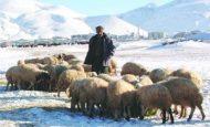 Doğu Anadolu Bölgesinin Meslekleri Nelerdir?