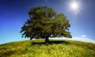 Ağaçların Kesilmemesi İçin Ne Yapmalıyız?