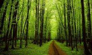 Ağaçları Korumak İçin Neler Yapmalıyız?