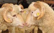 Marmara Bölgesi'nin Hayvancılık Faaliyetleri Nelerdir?