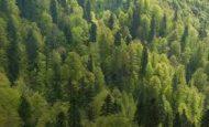 Ormanların İnsanlara Ve Ekonomiye Olan Katkıları Nelerdir?