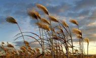 Rüzgarın Hızını Etkileyen Faktörler Nelerdir?