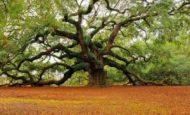 Ağaçları Neden Korumalıyız Kompozisyon
