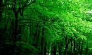 Ormanlar İle İlgili Sloganlar