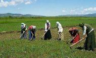 Günümüzdeki Mevsimlik İşçiler İle Orta Çağ Avrupa'sındaki Çiftçiler Arasında Hangi Benzerlik Ve Farklılıklar Vardır?