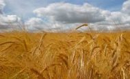 İlk Çağ'da Tarım Yapan Bir Çiftçi Olsaydınız Toprağınızı Nasıl İşlerdiniz Ürünlerinizi Nasıl Toplar Ve Taşırdınız?