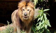 Ormandaki Hayvanlarla İlgili Hikaye Örneği