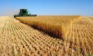 Tarımda Verimliliği Etkileyen Faktörler Nelerdir?