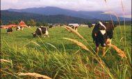 Türkiyede Tarım Ve Hayvancılığı Etkileyen Faktörler Nelerdir?