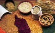 Karasal İklimde Yetişen Tarım Ürünleri Nelerdir?