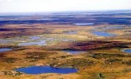 Tundra İkliminin Özellikleri Nelerdir?