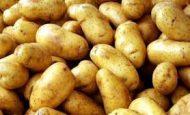 Patates En Çok Nerede Hangi Bölgede Yetişir?
