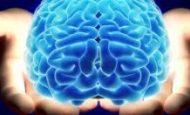 Akıllı Bir Varlık Olmak İnsana Ne Gibi Yararlar Sağlamıştır?