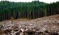 Ormanlar Neden Yok Oluyor?