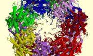 Enzimlerin Çalışmasını Etkileyen Faktörler Nelerdir?