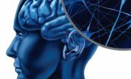Sinir Sistemi Ve Endokrin Sistem Arasındaki İlişki Nedir?
