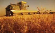 Tarımın Türkiye Ekonomisindeki Yeri Ve Önemi