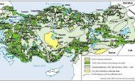 Türkiye'de Görülen Bitki Örtüleri Ve Özellikleri Kısaca