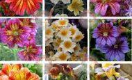 Çiçeğin Bölümleri Ve Görevleri Nelerdir?