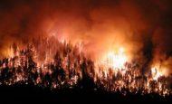 Orman Yangınlarını Önlemek İçin Alınması Gereken Tedbirler