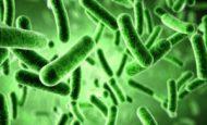 Bakterilerin Günlük Hayattaki Olumlu Etkileri Nelerdir?