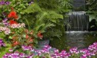Çiçekli Ve Çiçeksiz Bitkilere Örnekler İsimleri 10 Tane