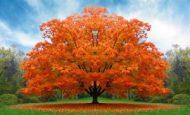 Ağaçlar İle İlgili Sloganlar